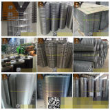 Galvanized PVC Coated Stainless Steel Aviary Welded Wire Mesh