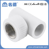 PPR Female Tee Type D Fitting for Building Material