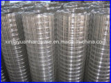 Building Material Galvanized Welded Wire Mesh