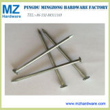 High Quality Common Iron Hardware Nail