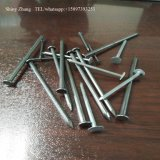 Building Use High Quality Common Nail