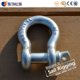 Wholesale Us Type HDG Screw Bow Shackle